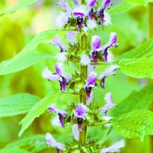 Herbs-fibroids