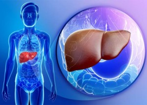 new-liver-cells